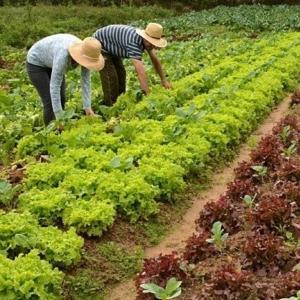 PAA – Programa de Aquisição de Alimentos teve início nesta segunda-feira(12)